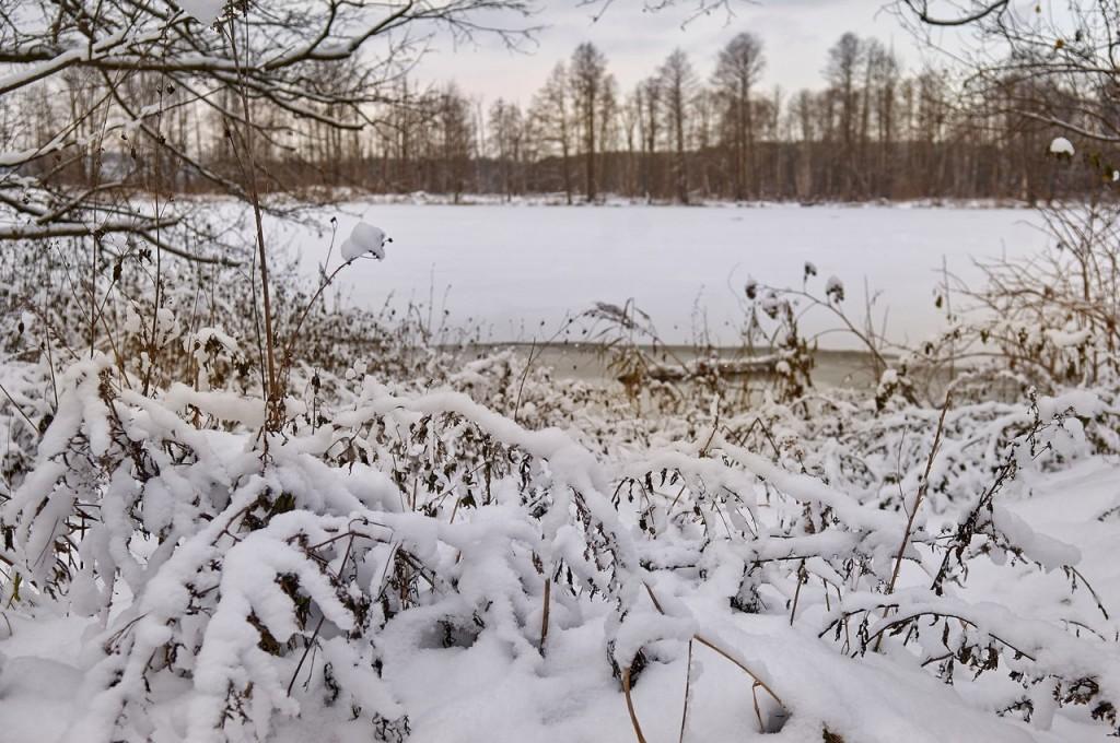 Зима вступает в свои права (загородный парк Владимира) 03