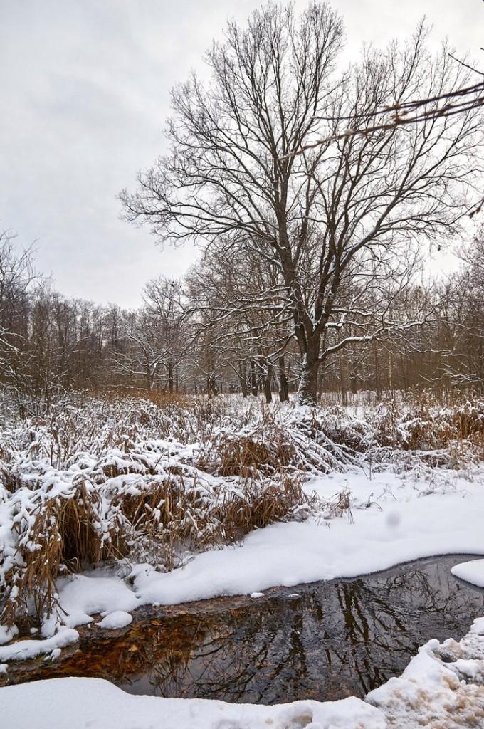 Зима вступает в свои права (загородный парк Владимира) 04