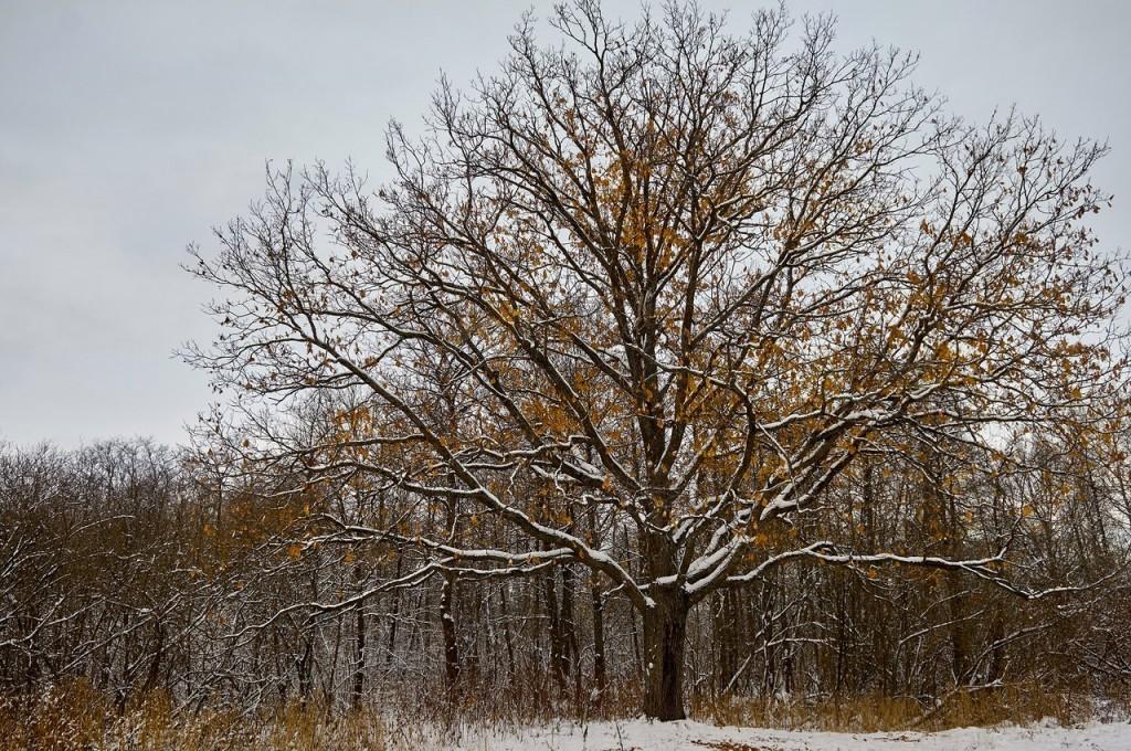 Зима вступает в свои права (загородный парк Владимира) 05