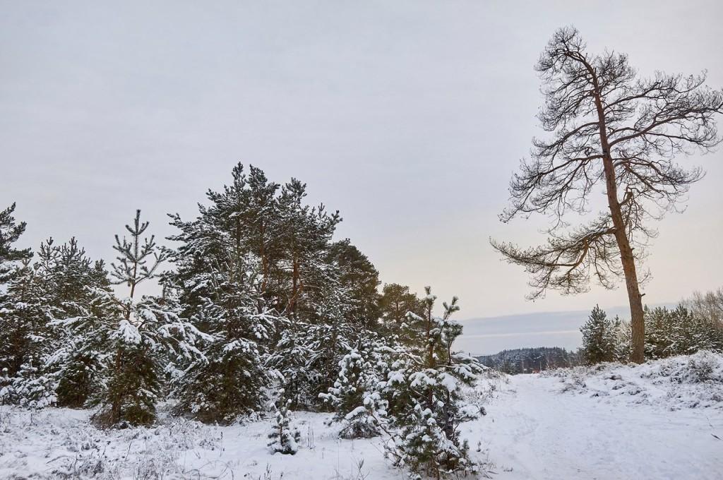 Зима вступает в свои права (загородный парк Владимира) 06