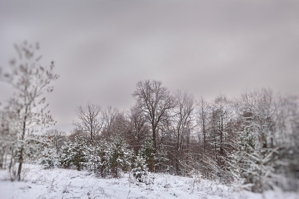 Зима вступает в свои права (загородный парк Владимира) 08