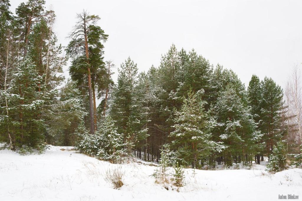 Зимний лес. Гусь-Хрустальный