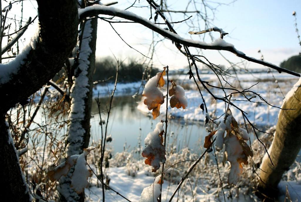 Конец ноября на реке Нерехте 02