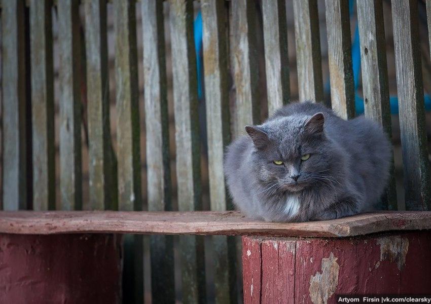 Очарование осеннего Суздаля (и суздальских котов) 05