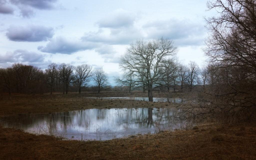 Пойма Клязьмы недалеко от озера Бедины, весна