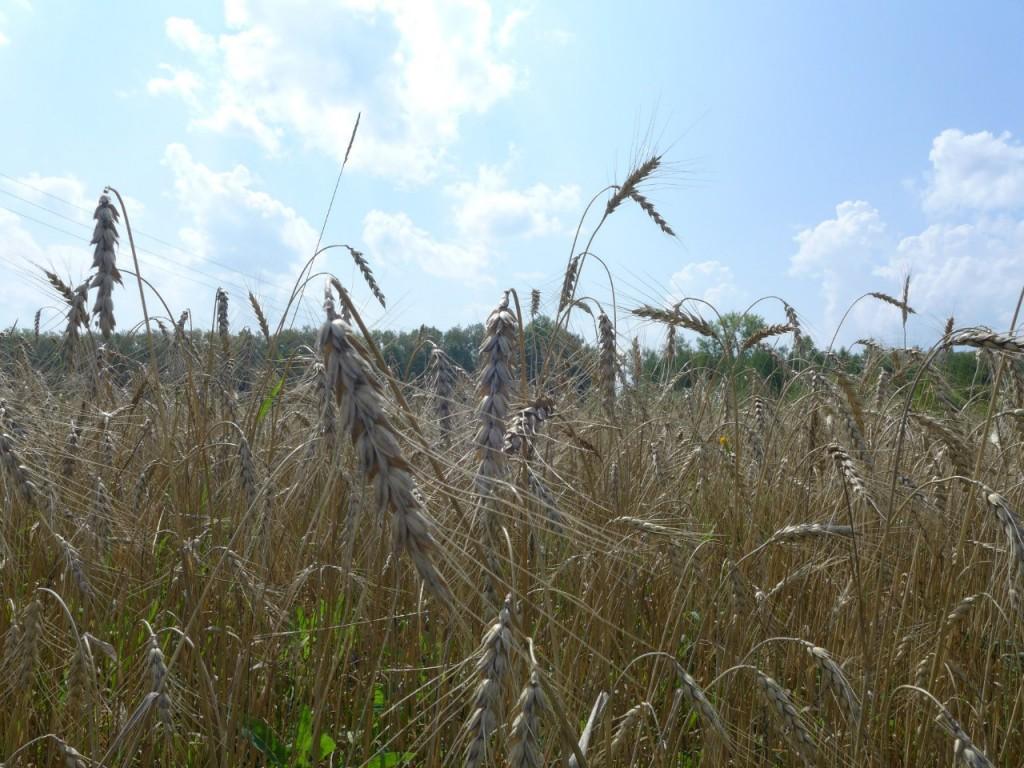 Фото с вязниковских полей, ноябрь 06