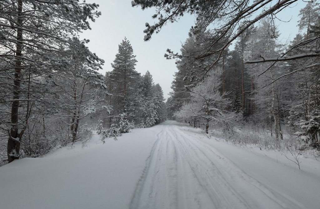 Головинские леса, Судогодский р-н