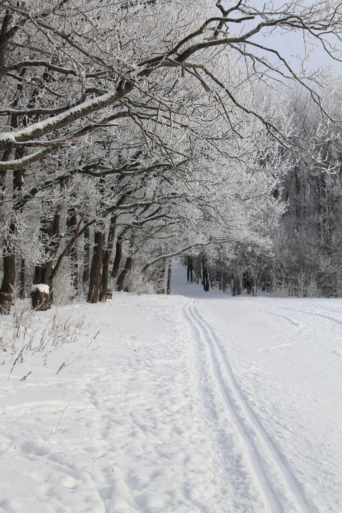 Морозная прогулка по парку Дружба (начало декабря 2016) 05