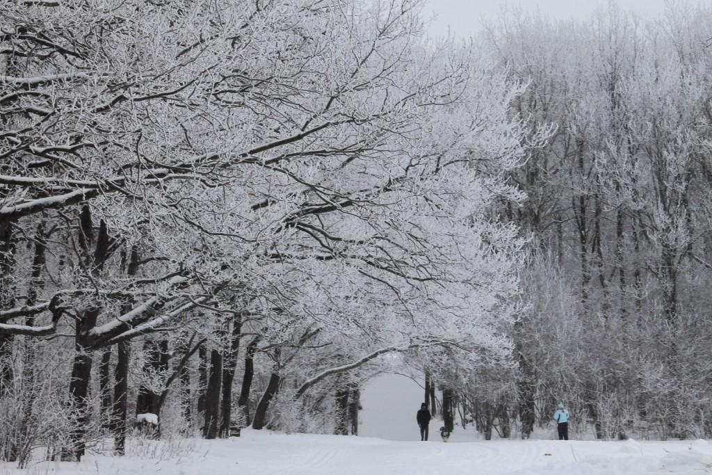 Морозная прогулка по парку Дружба (начало декабря 2016) 07