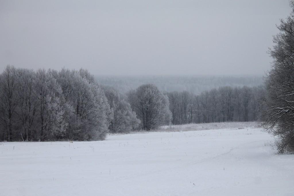 Морозная прогулка по парку Дружба (начало декабря 2016) 08