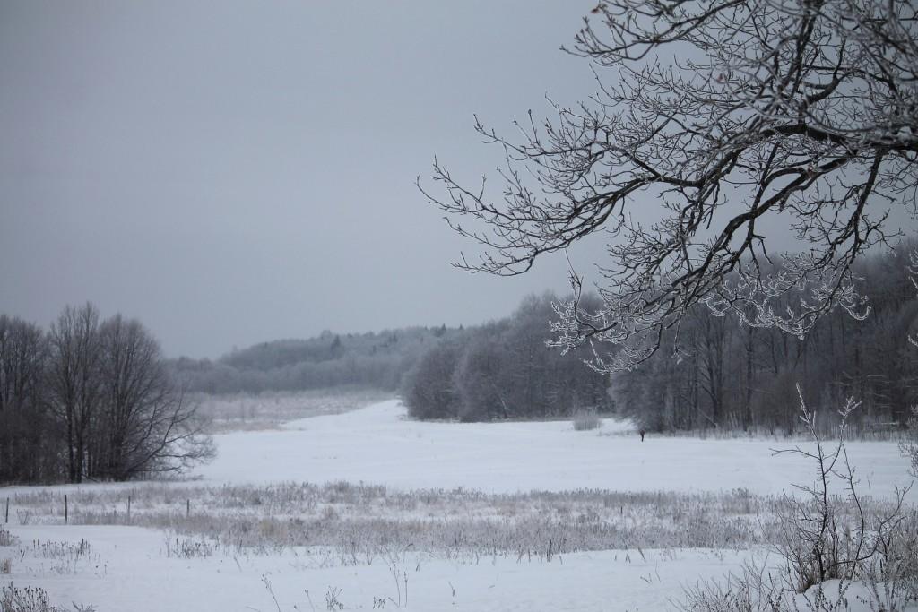 Морозная прогулка по парку Дружба (начало декабря 2016) 09