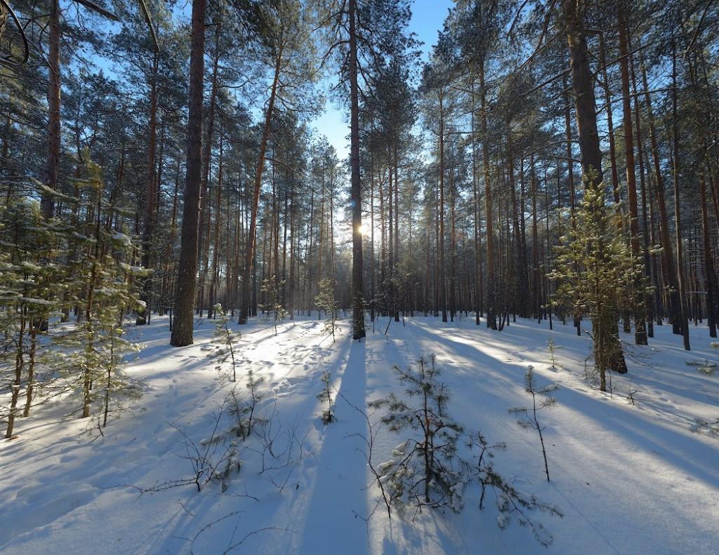 В южных окрестностях Владимира, по дороге на озеро Поганое