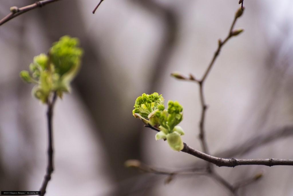 Конец апреля во Владимирской области 03