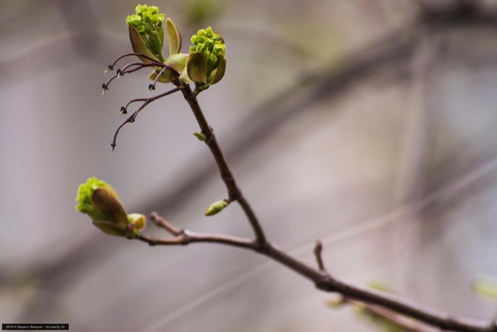 Конец апреля во Владимирской области 05