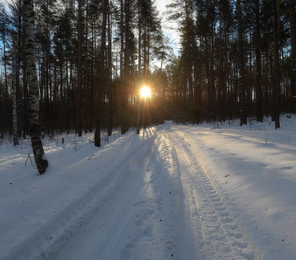Лесная дорога в окрестностях села Спас-Купалище, Судогодский р-н