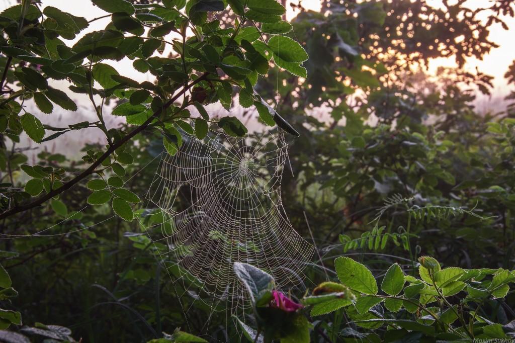 Немного воспоминаний о свежести летнего утра 03