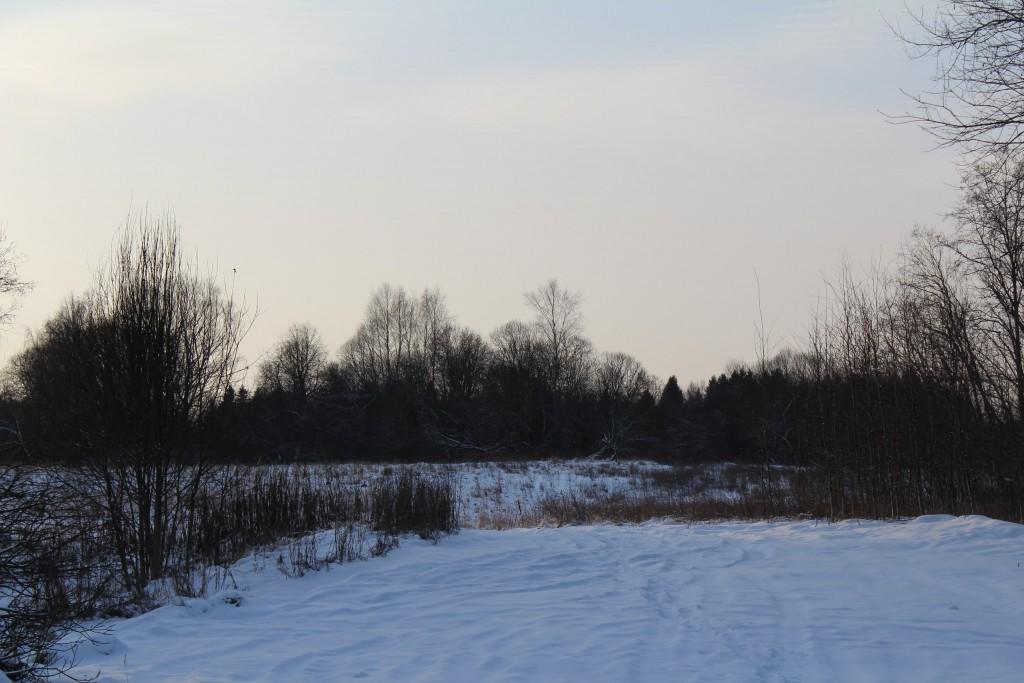 Александровский район, в лесу за д. Шиклово 03