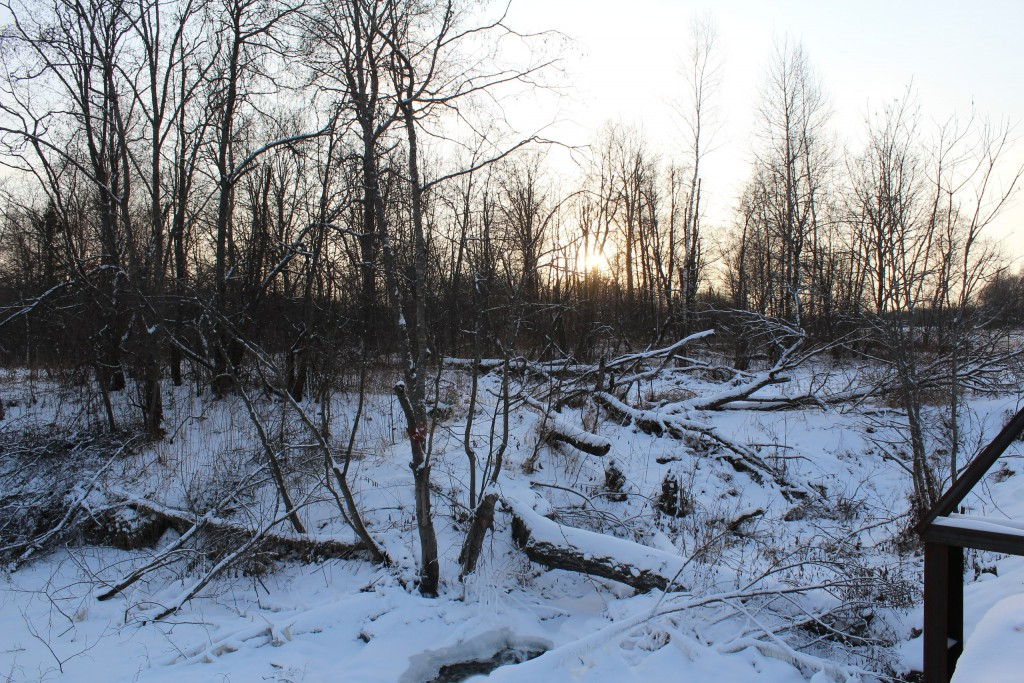Александровский район, в лесу за д. Шиклово 04
