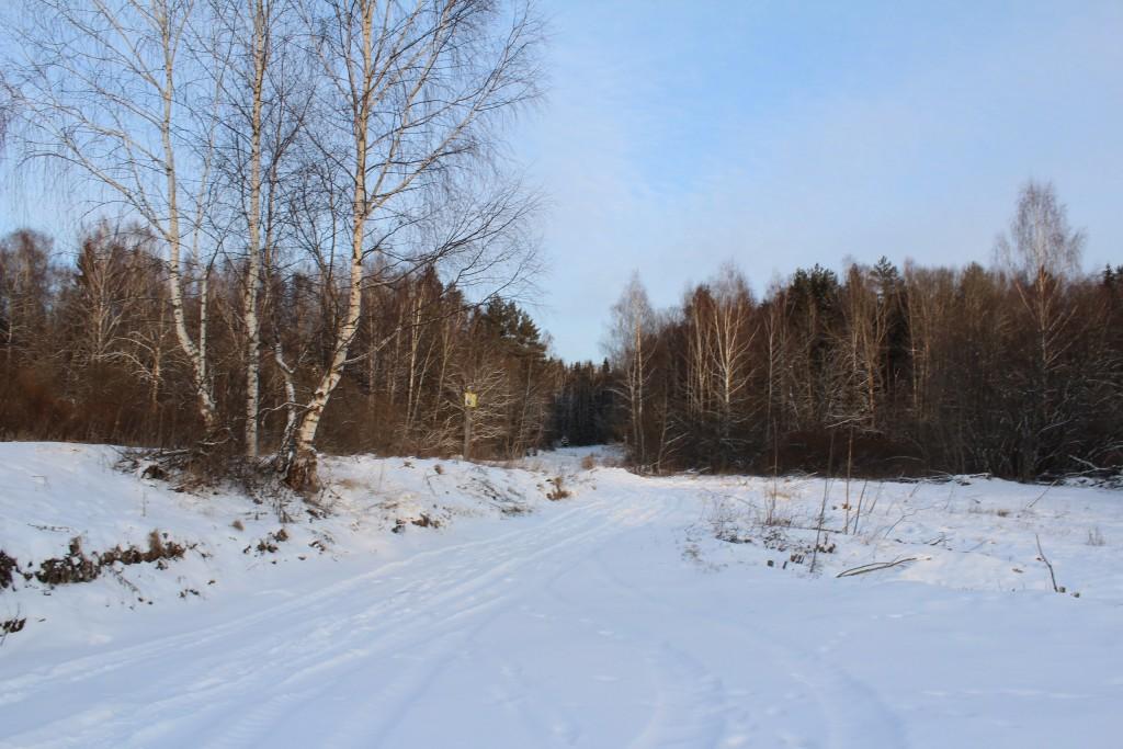 Александровский район, в лесу за д. Шиклово 05
