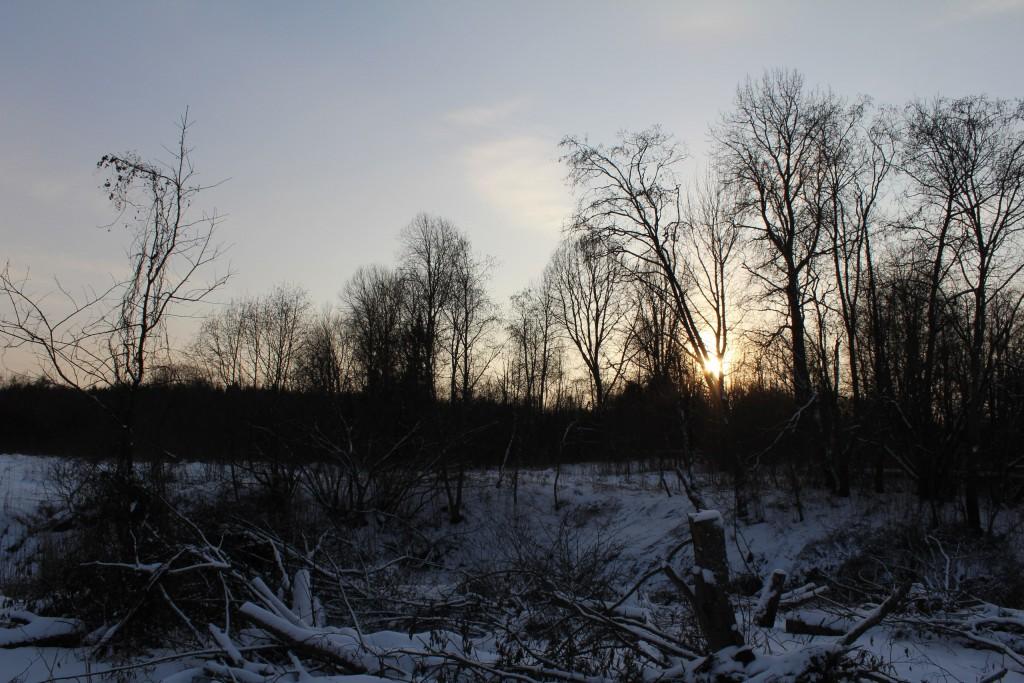 Александровский район, в лесу за д. Шиклово 06