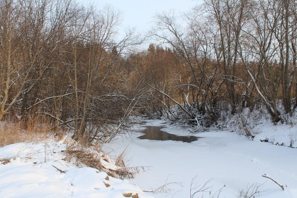 Александровский район, в лесу за д. Шиклово 09