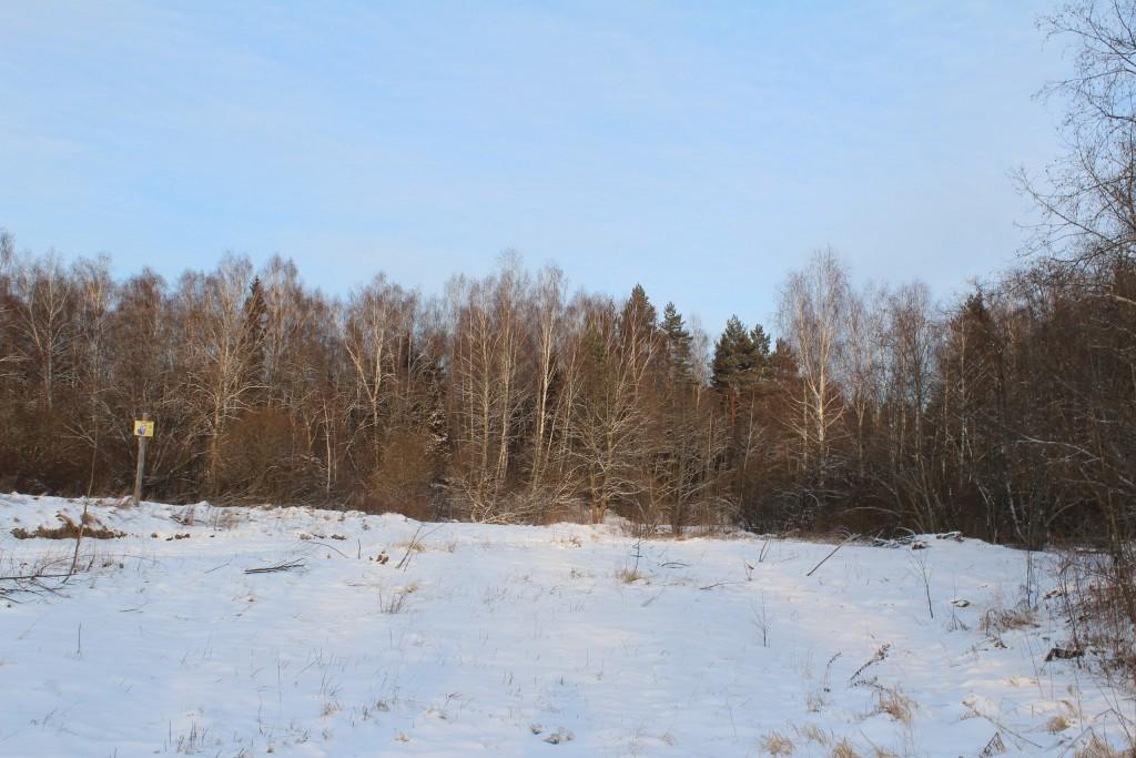 Александровский район, в лесу за д. Шиклово 10