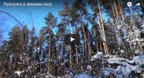 Зимний лес около Вязников