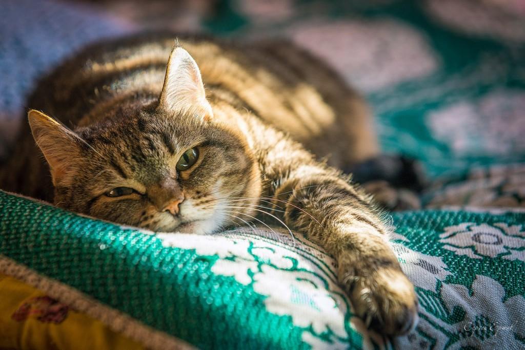 Кот - это мохнатый будильник
