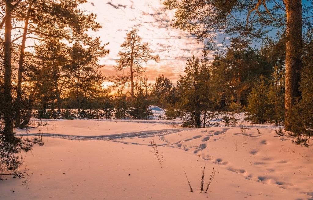 Февральский закат (в загородном парке Владимира) 01