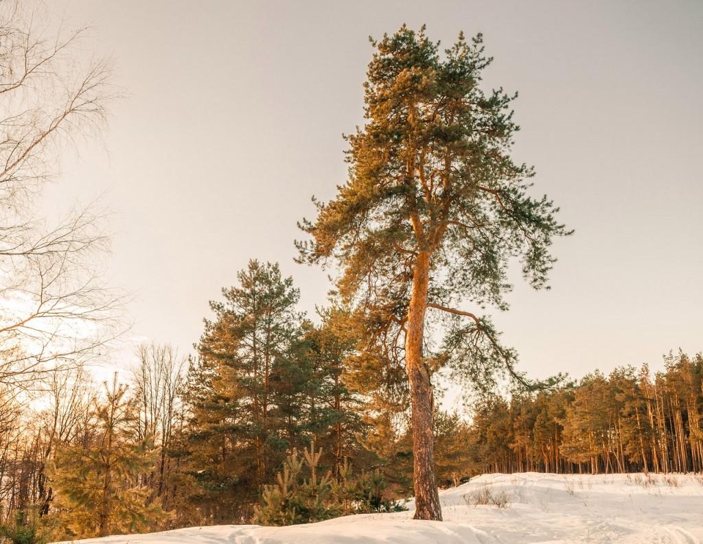 Февральский закат (в загородном парке Владимира) 05