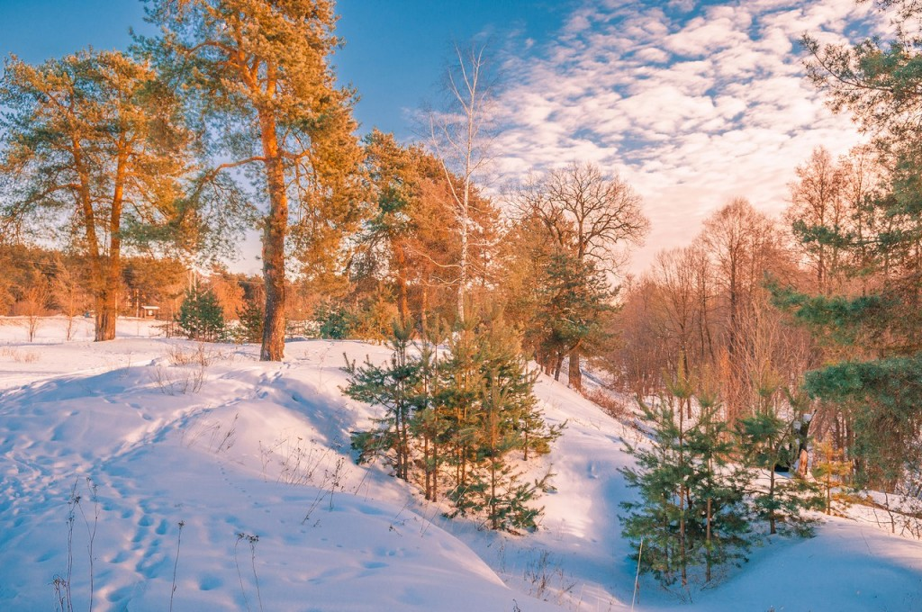 Февральский закат (в загородном парке Владимира) 06