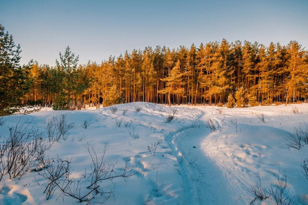 Февральский закат (в загородном парке Владимира) 08