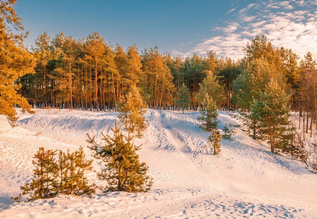 Февральский закат (в загородном парке Владимира) 10