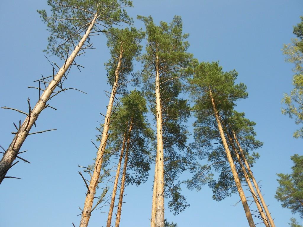 Александровский лес 01
