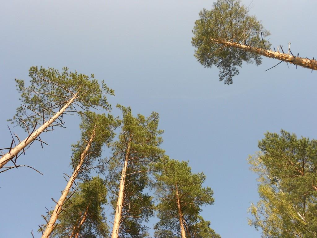 Александровский лес 02