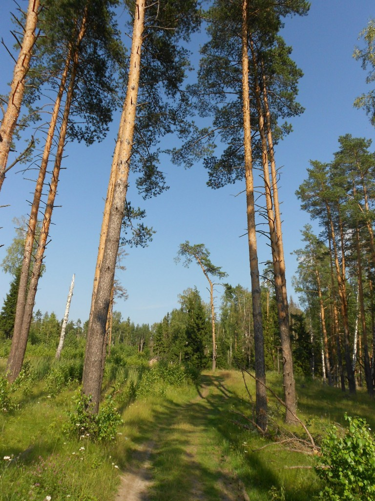 Александровский лес 03