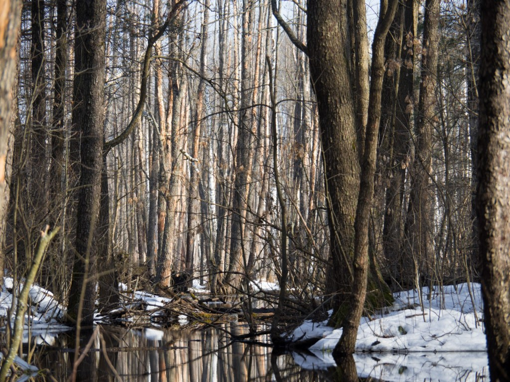 Покров, река Шитка. У истока реки, среднее течение, ближе к болоту 01