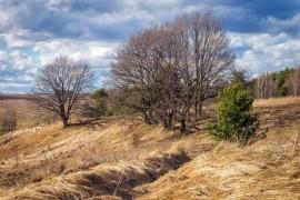 Весна. Окрестности Владимира. Природа просыпается после зимы