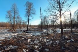 Во Владимирской области есть несколько малых рек с названием Каменка