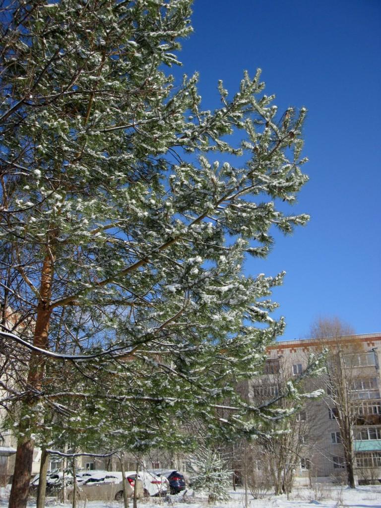 Вязники после первоапрельского снегопада 03