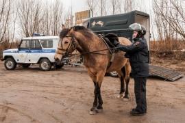 Конная полиция, патрулирование СНТ (апрель, Владимир)