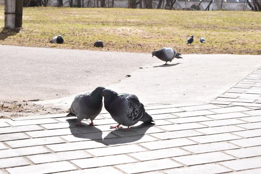 Прогулка по Александрову. Весна 03