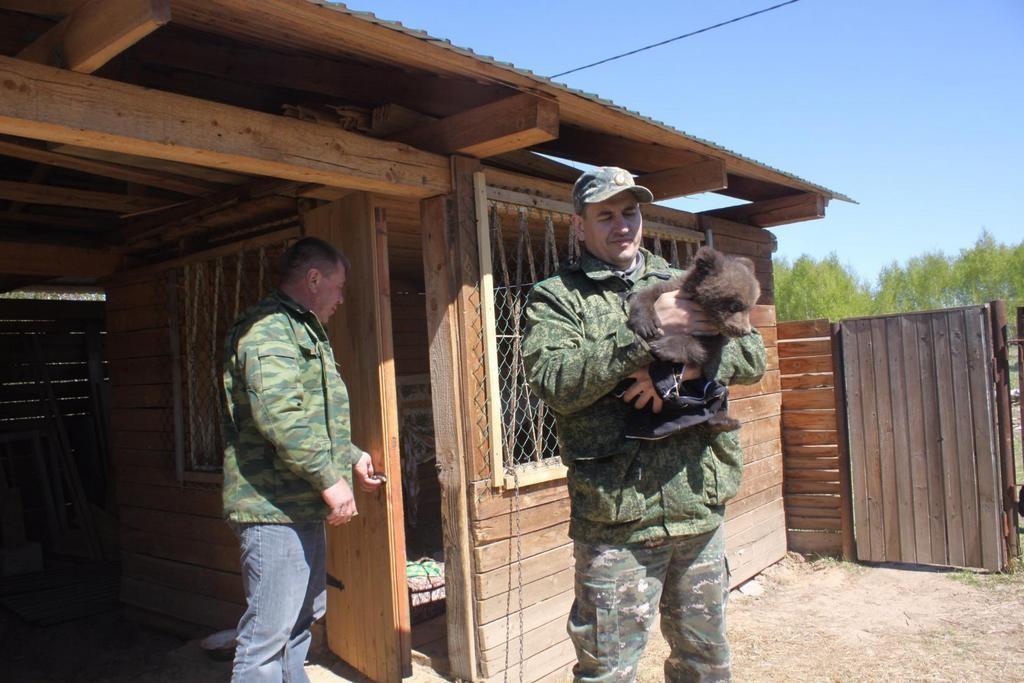 Бурый медвежонок из Нижегородской области обрёл новый дом в национальном парке «Мещёра» 02