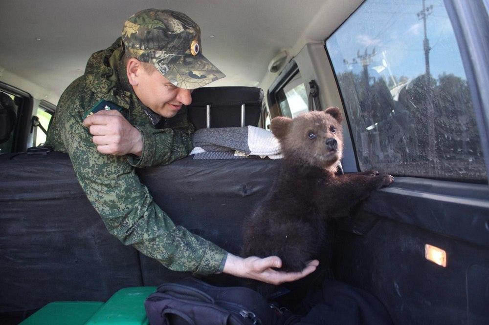 Бурый медвежонок из Нижегородской области обрёл новый дом в национальном парке «Мещёра» 03