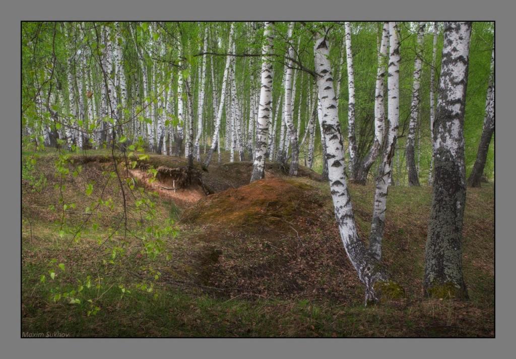Весенний лес в Вязниковском районе