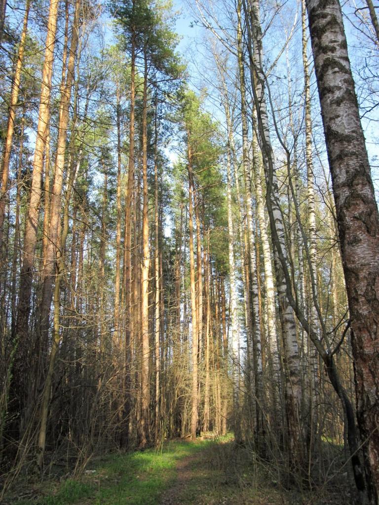 Весна в лесу около Вязников 01