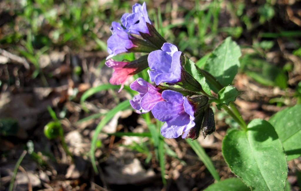 Весна в лесу около Вязников 02