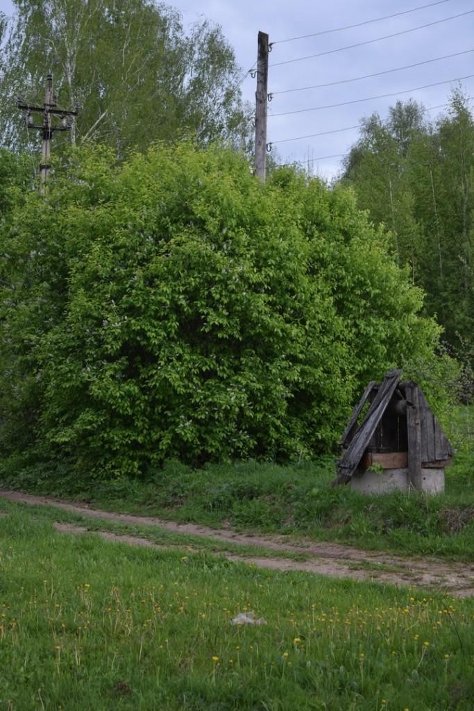 Деревня Кучки, Юрьев-Польский район 04