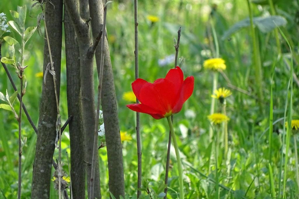 Майские цветы 01