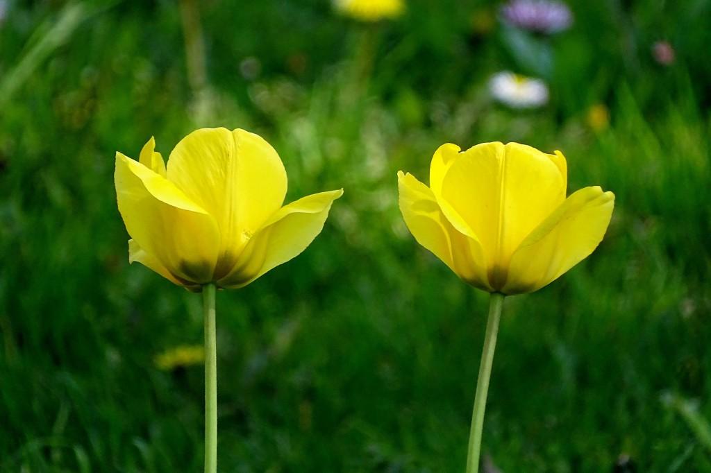 Майские цветы 02